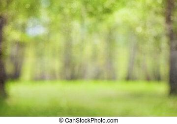 primavera, floresta verde, obscurecido, ou, defocused, fundo