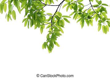 primavera, folha, verde, natureza