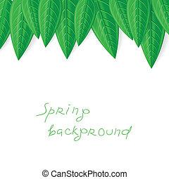 primavera, folhas