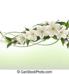 primavera, fondo, con, bianco, ciliegia, fiori