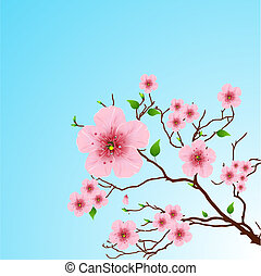 primavera, fondo, floreale