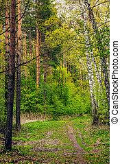primavera, foresta