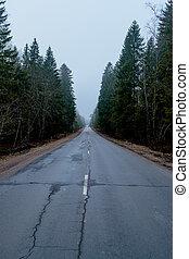 primavera, foresta, automobile, strada, foto