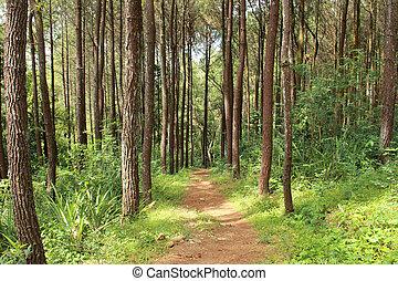 primavera, foresta, sentiero