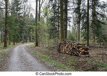 primavera, foresta, strada