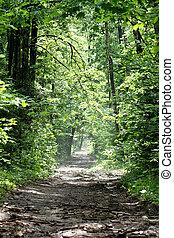 primavera, foresta, strada, mattina