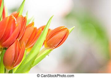 primavera, frontera, flores, diseño, tulipán