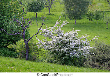 primavera, frutteto, tempo