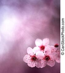 primavera, fundo, com, flores, e, cor-de-rosa, cores