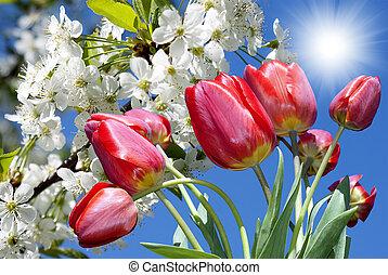 primavera, fundo, natureza