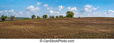 primavera, giovane, orizzonte, panorama, cielo, barbabietola, cavoletti di bruxel, zucchero, campo