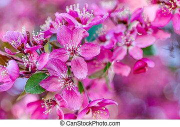 primavera, granchio, fiore, mela, albero