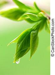 primavera, hojas, verde