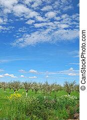 primavera, huerto
