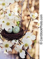 primavera, huevos, y, nido