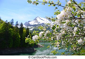 primavera, in, svizzera