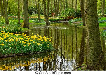 primavera, jardín, keukenhof, países bajos