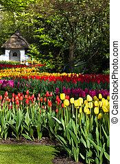 primavera, jardim, coloridos, tulips