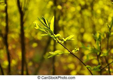 primavera, legno