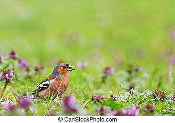 primavera, luminoso, flores, pássaro