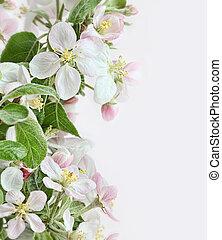 primavera, mela, fiori, su, rosa, sfondo bianco