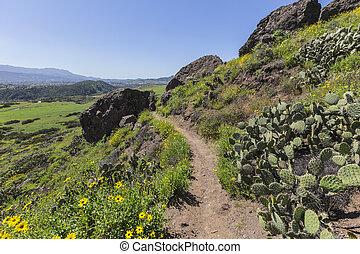 primavera, mil, california., carvalhos, rastro