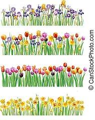 primavera, multicolor, set, fiori, profili di fodera
