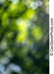 primavera, natural, fondo velado, bokeh., follaje verde, en el parque