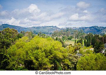 primavera, nature., hermoso, paisaje., parque, con, hierba verde, y, tr