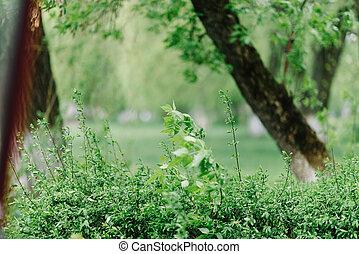 primavera, nature., hermoso, paisaje., tranquilo, plano de fondo