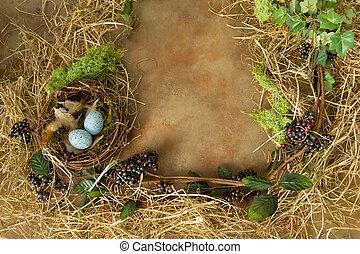 primavera, nido, frontera