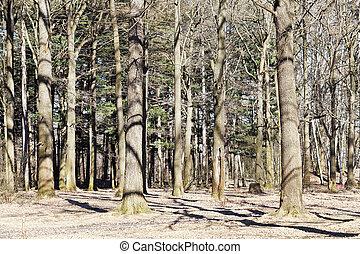 primavera, nu, carvalho, floresta, árvores