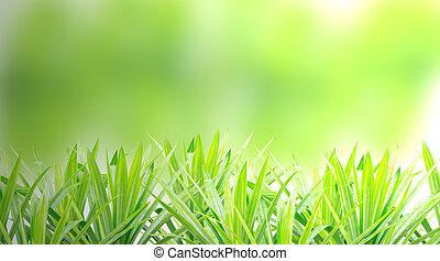 primavera, orvalho, capim, fresco, manhã