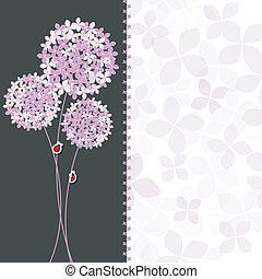 primavera, púrpura, rosa, hydrangea, flor, tarjeta de felicitación