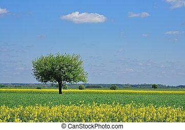 primavera, paesaggio