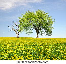 primavera, paisagem, árvores