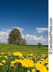 primavera, paisagem.