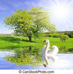 primavera, paisagem, com, cisne, ligado, água