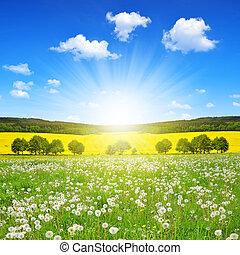 primavera, paisagem, com, dandelions