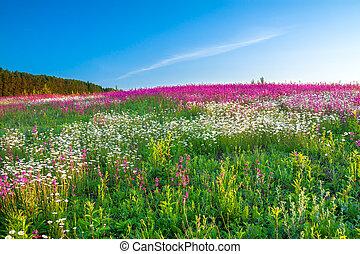 primavera, paisagem, com, flores, ligado, um, prado