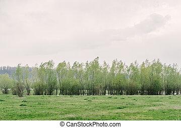 primavera, paisaje, árboles verdes