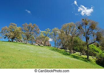 primavera, paisaje