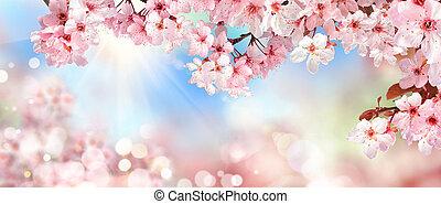primavera, paisaje, con, rosa, flores de cerezo