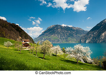 primavera, paisaje, en, lago, lucern