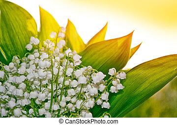 primavera, paisaje., flores, lirio del valle