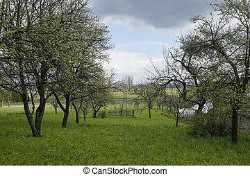 primavera, paisaje rural, con, huerto de fruta