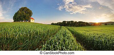 primavera, panorama, campo, paisaje, con, campo de trigo