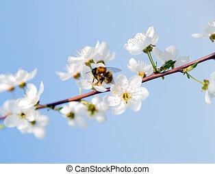 primavera, papel parede, fruta árvore, florescer, flores