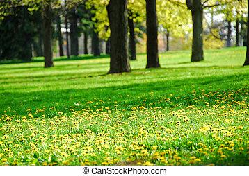 primavera, parco