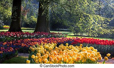 primavera, parque, coloridos, tulips